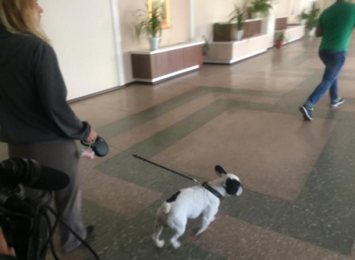 Şase elevi din clasa a II-a de la un liceu din capitală, muşcaţi de un câine. S-a întâmplat pe teritoriul instituției