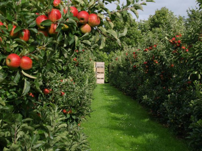 120 de milioane de euro pentru dezvoltarea horticulturii din Moldova: Agenții economici și gospodăriile vor putea împrumuta între cinci mii și cinci milioane de euro