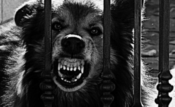 În România a fost adoptată legea eutanasierii câinilor maidanezi