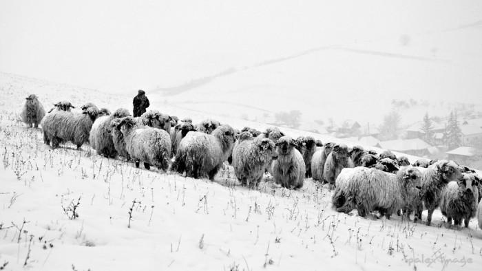 Un bărbat din raionul Comrat, dat dispărut: A mers la stână după oi, dar nu s-a mai întors acasă