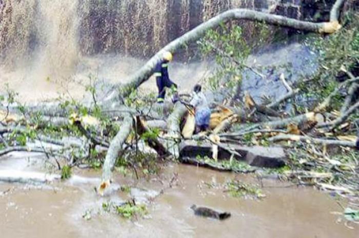 Cel puţin 20 de morţi, inclusiv elevi, în urma prăbuşirii unui copac în Ghana