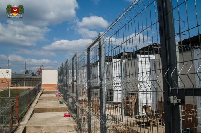 Centrul de Plasament pentru animalele fără stăpân din Orhei își mărește capacitatea