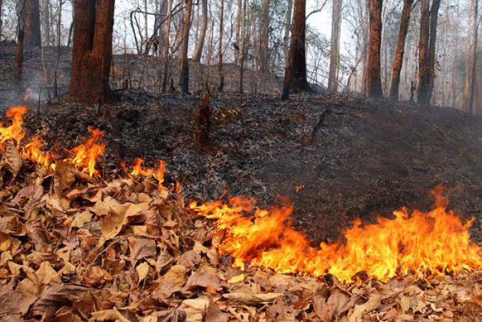 (doc) Amenzi usturătoare pentru cei care vor arde frunzele. Vor fi efectuate controale în toată țara