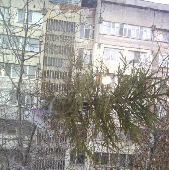 Facebook: Culmea nesimțirii în Chișinău! A aruncat bradul peste balcon!