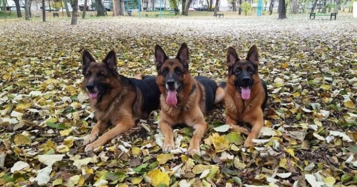 Patrupezii poliției de frontieră: Atilo, Faradey, Yoka și Cristo au participat la o expoziție în Bulgaria
