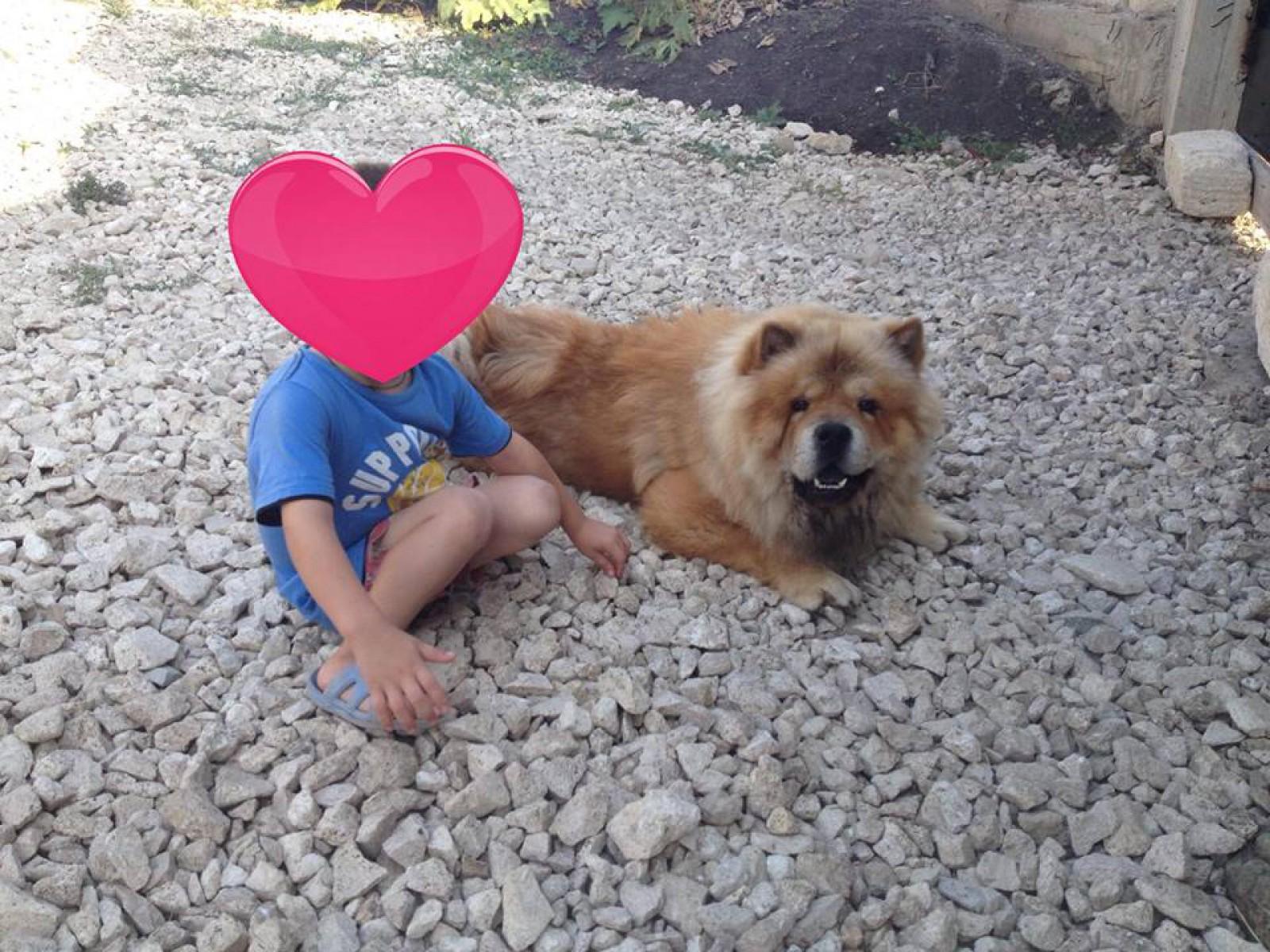 (foto) Caz ieșit din comun în Ialoveni: Vecinul a intrat în ograda unei familii și i-a împușcat câinele de rasa Chow Chow
