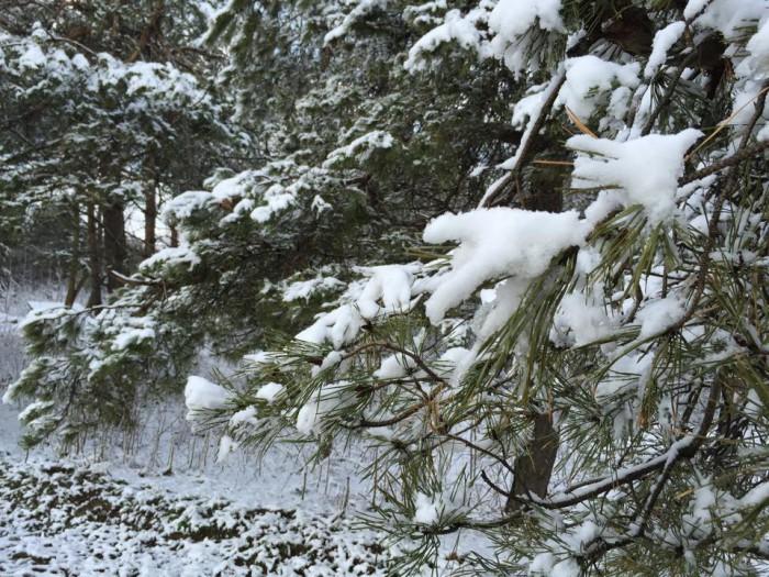 (foto) Zăpada mieilor. Iarna a revenit în Moldova