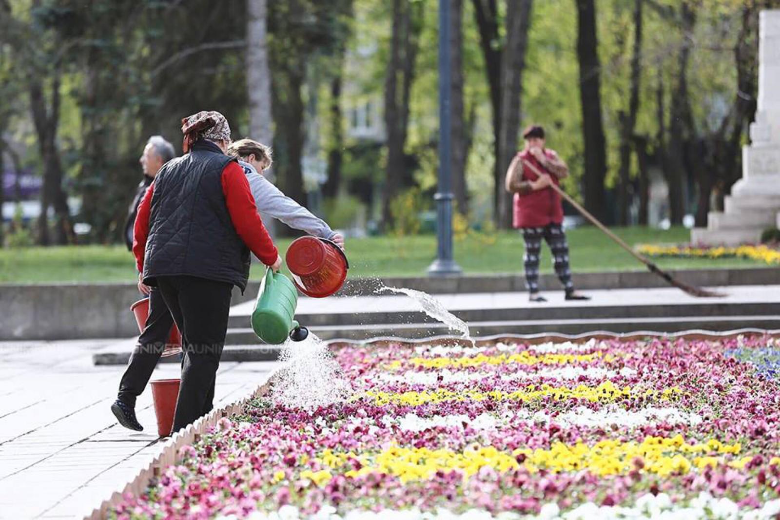 """(galerie foto) Operațiunea """"Salvați florile din Scuarul Catedralei"""": Covorul Silviei Radu urmează a fi mutat în parcurile capitalei"""
