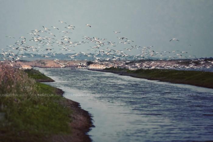 (video/galerie foto) Peisaje ce-ți taie respirația! Raiul pelicanilor din sudul Moldovei