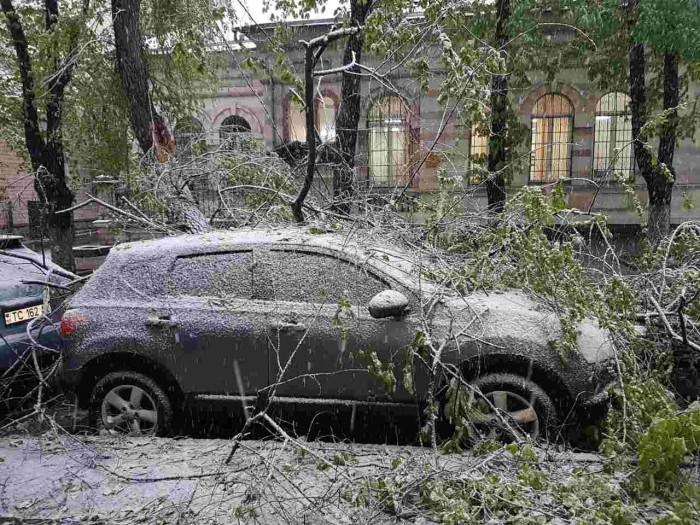 (galerie foto) Un copac a distrus câteva maşini pe strada Iorga