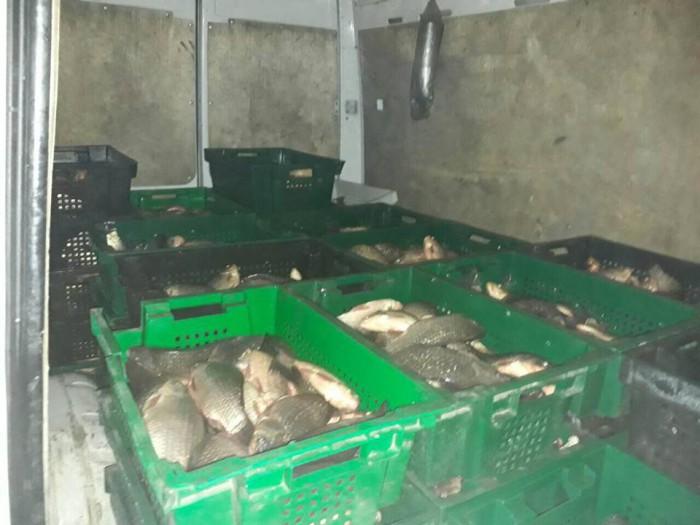 Jumătate de tonă de pește transportat fără acte, urma să ajungă a fi comercializată în Chișinău