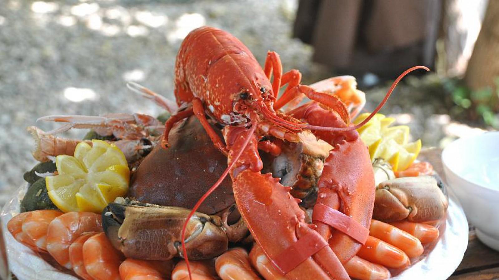 Legi pentru protecția animalelor: Elveția va interzice fierberea lobsterilor de vii