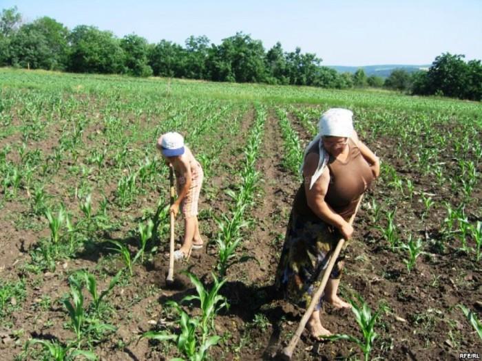 Mold-street: Agricultorii au primit doar 5% din valoarea subvenţiilor