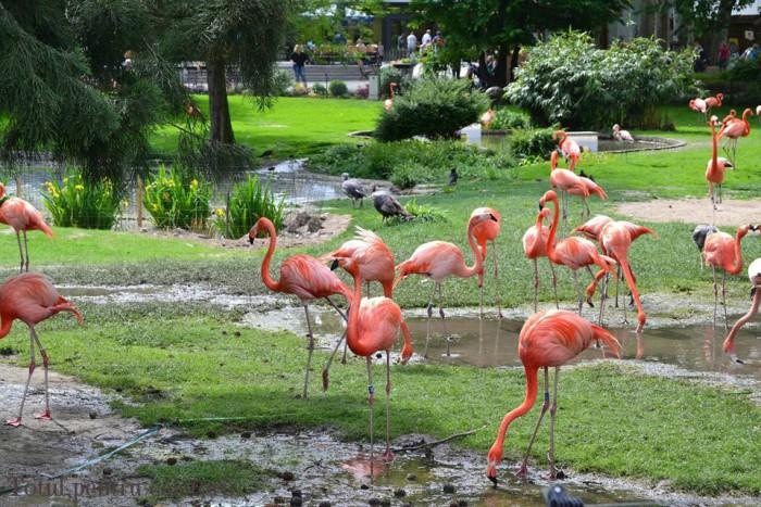 O Grădină Zoologică din Koln va primi moștenire circa 22 de milioane de dolari