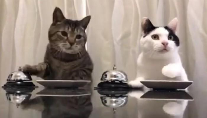 Oraşul din România în care nu ai voie să ai mai mult de două pisici