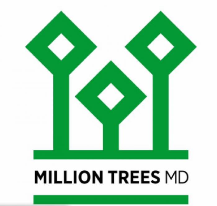 Proiect inedit: Un milion de arbori urmează să fie plantați în Republica Moldova