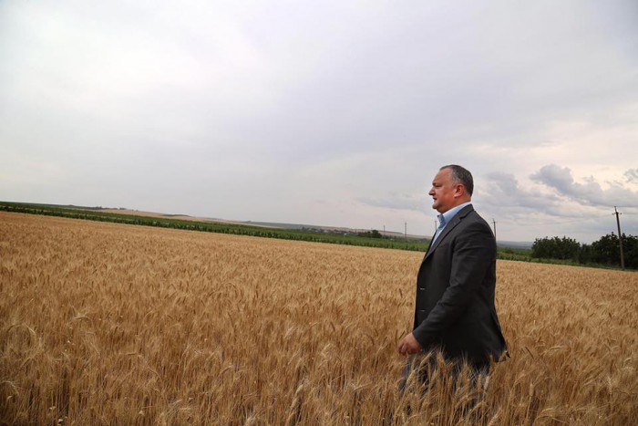 """Slusari, despre propunerea lui Dodon de majorare a TVA-ul pentru agricultori până la 20%: """"O lovitura fatală pentru sistemul agrar"""""""