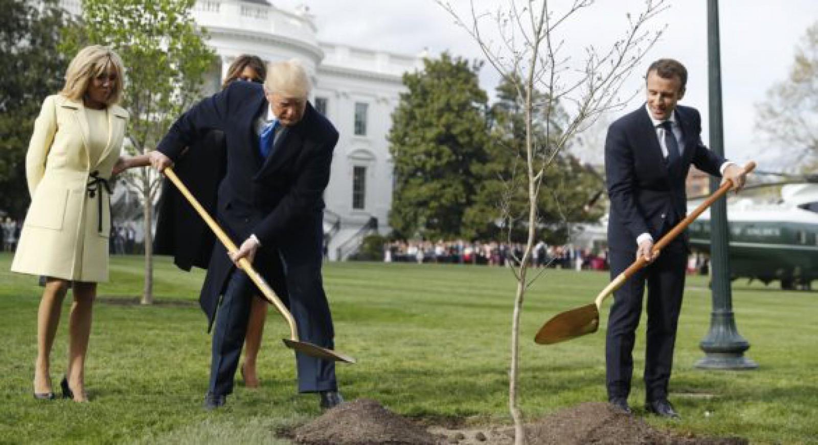 S-a aflat unde a dispărut stejarul plantat de Macron și Trump la Casa Albă: Explicația autorităților franceze
