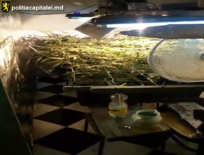 Un tânăr din Strășeni, deconspirat. Planta și usca cânepă sub ventilatoare într-un laborator improvizat în casă