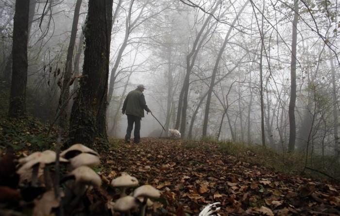 Vânătoare cu final trist în pădurea Țiganca. Un bărbat a fost împușcat în cap