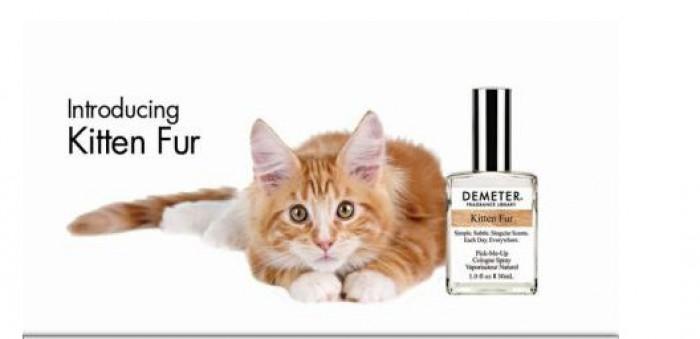 Veste bună pentru persoanele care iubesc pisicile. A fost lansat parfumul care mirosă exact ca și blana acestora