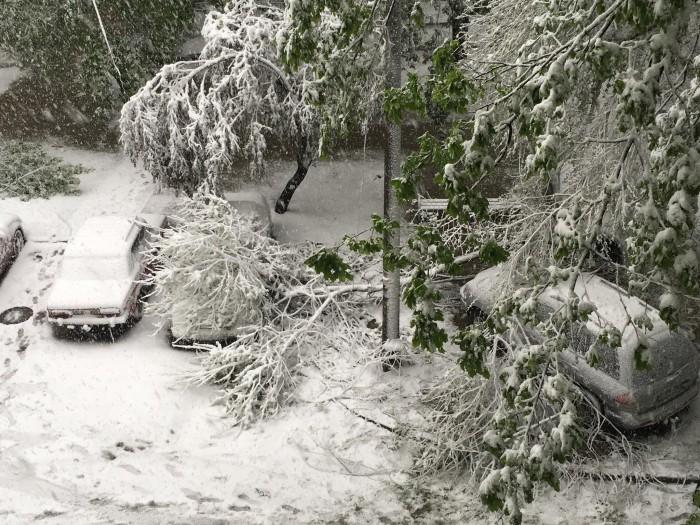 (video) Chişinău: Momentul când o creangă era să cadă peste un bărbat care îşi curăţa maşina de zăpadă
