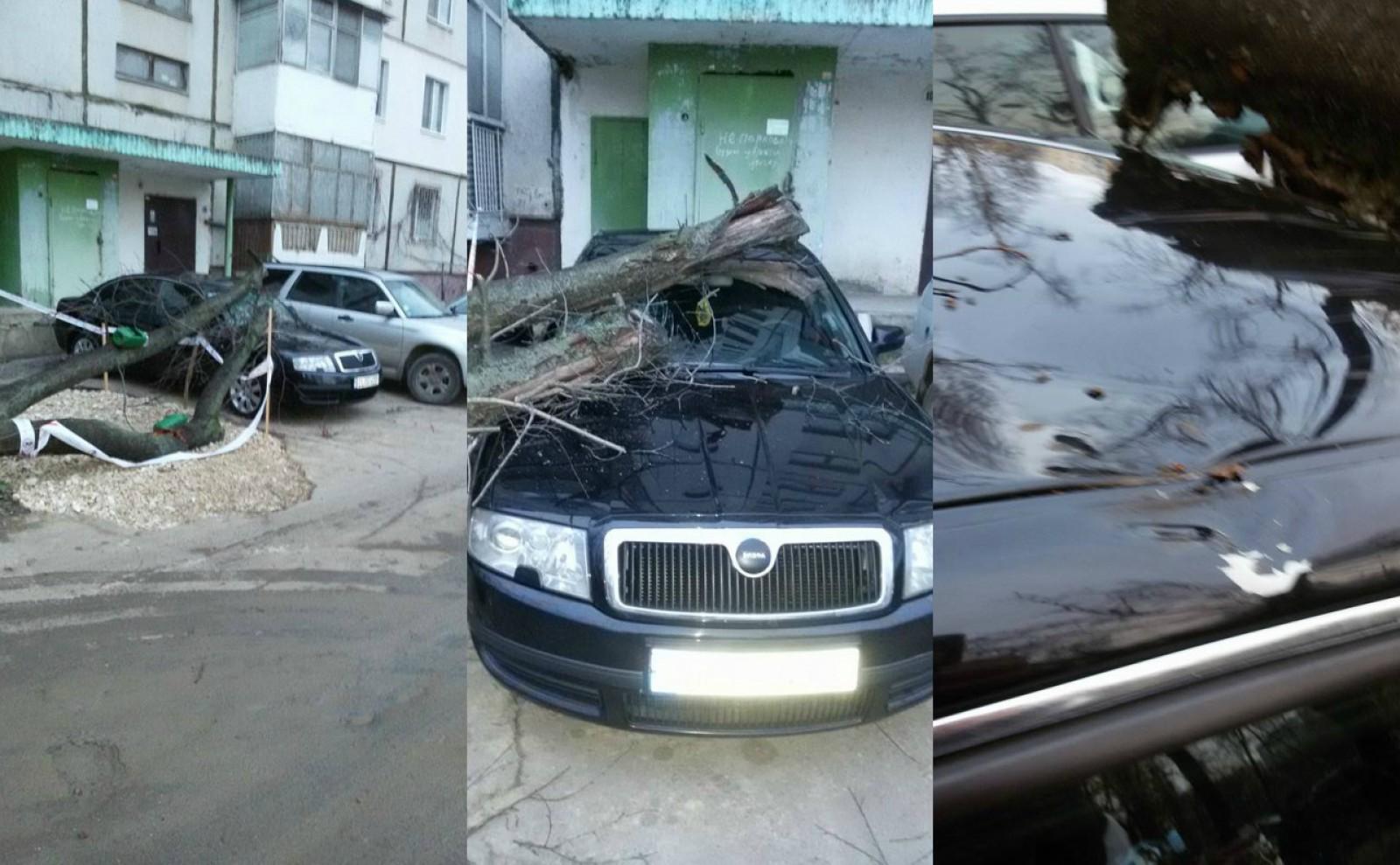 (video) Incident neplăcut pentru un şofer din sectorul Ciocana: I-a căzut un copac peste maşină