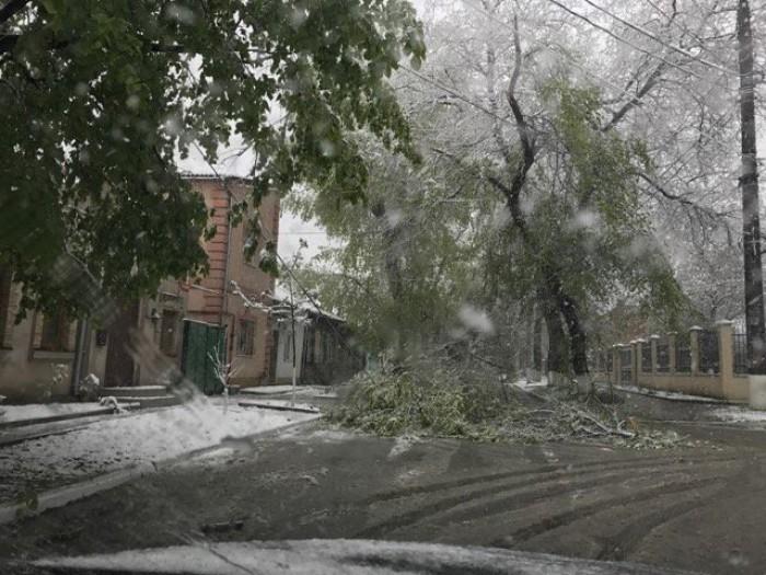 (video) Pagubele ninsorii în Chișinău: Se lucrează în condiții grele pentru deblocarea drumurilor de crengile rupte ale copacilor