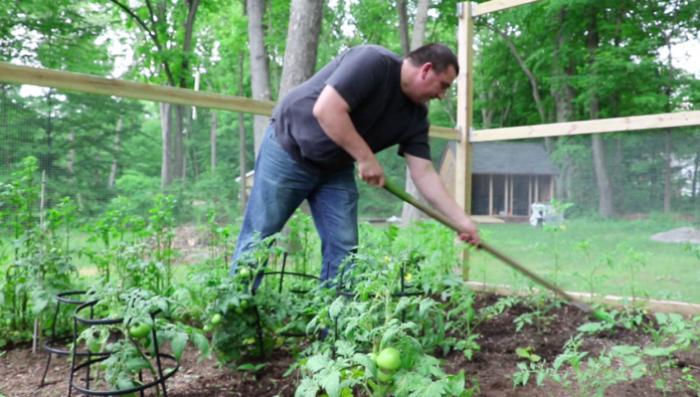 (video) Un moldovean și-a mutat grădina în SUA. Crește roșii, castraveți și ceapă