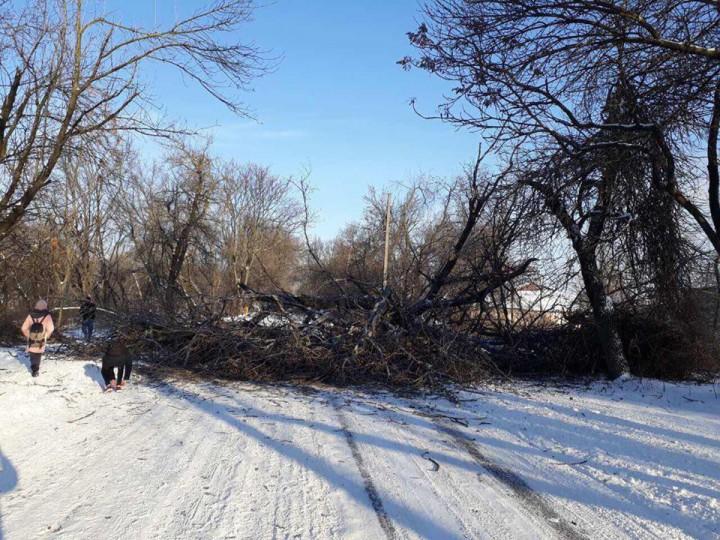 (foto) Trafic blocat pe șoseaua Muncești. Un copac a căzut peste carosabil