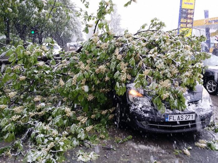(foto/video) Ninsoarea din Chişinău, văzută pe reţelele de socializare. Zeci de copaci au căzut pe străzi
