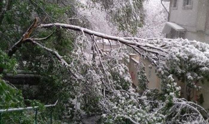 (video/ update/ galerie foto) Peisaj apocaliptic în Chișinău, dar și în întreaga țară. Sute de copaci, doborâți la pământ, drumuri blocate, sate fără lumină