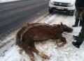 Petiție după ce un cal a fost bătut până a murit: Cerem introducerea pedepsei penale pentru cruzime față de animale