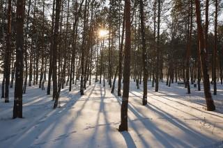 Prognoza meteo: Ninsori în toată țara și temperaturi de până la 3 grade