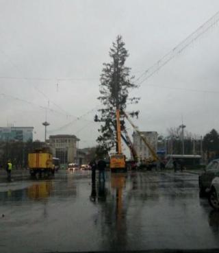 Silvia Radu dă asigurări: Banii cheltuiți pentru transportarea bradului din Ucraina vor fi recuperați