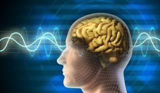 Studiu: Structura creierului adulţilor este diferită în funcţie de statutul socio-economic