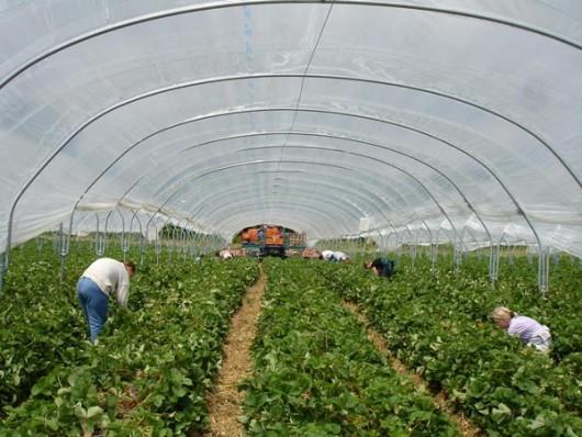 a151b2d3600e Afaceri agricole de succes a unei familii din Cojuşna - Străşeni ...