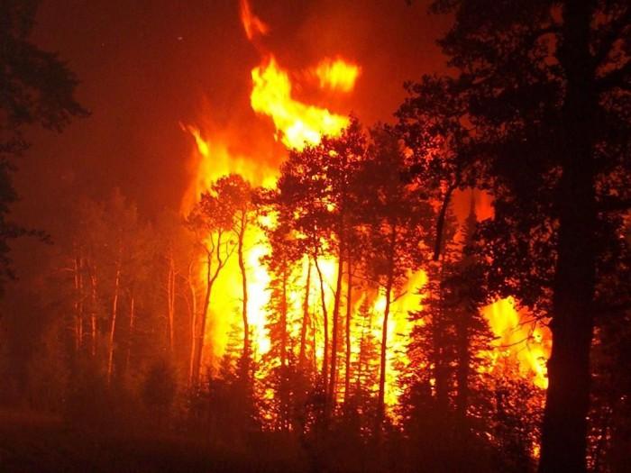 Cel puțin 15 morți, și alți 180 de oameni au fost dați dispăruți, în urma incendiilor din California