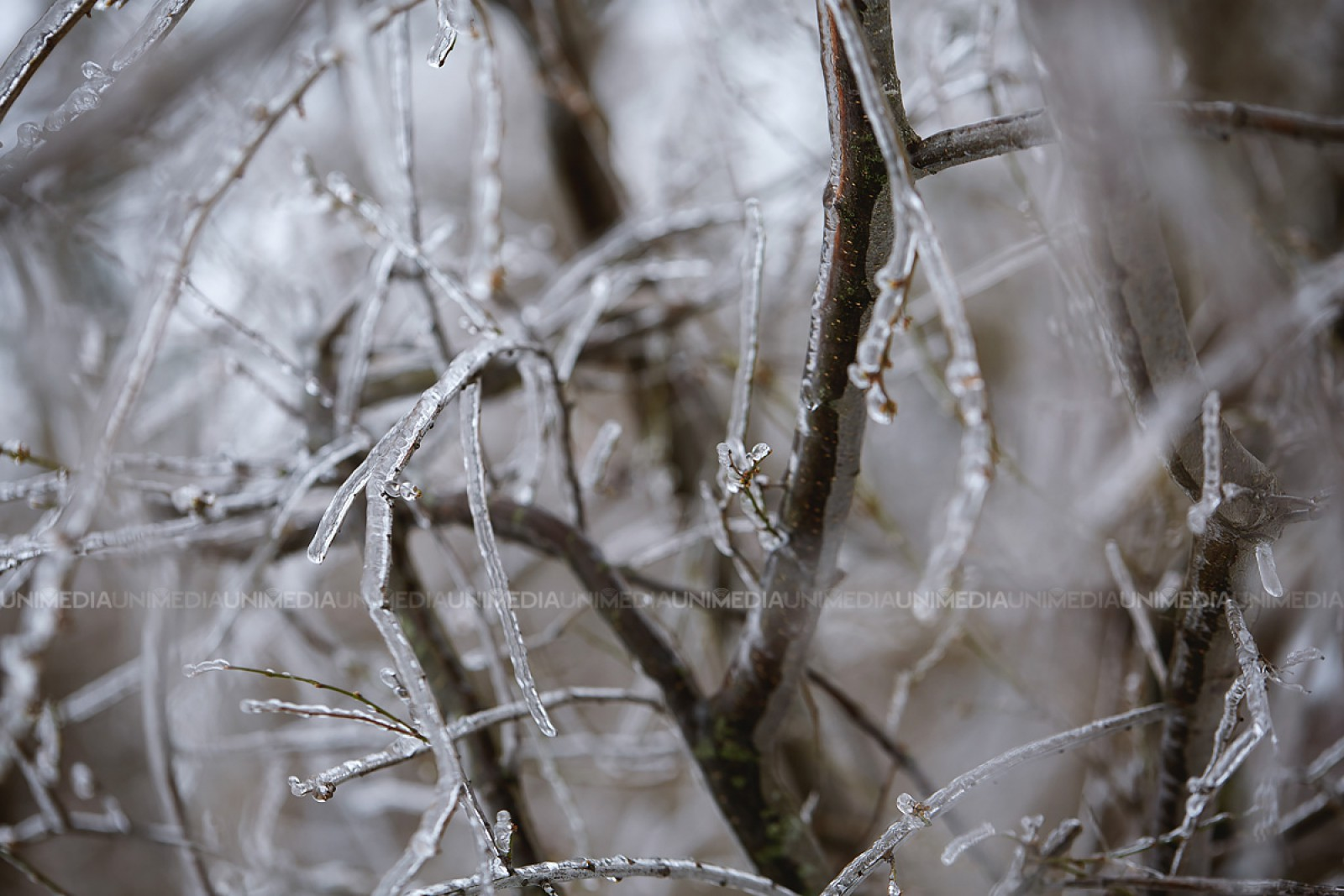 Iarna nu se lasă dusă! Codul galben de ninsori, frig și vânt se prelungește