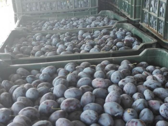 Circa 20 de tone de prune moldovenești, interzise în Federația Rusă