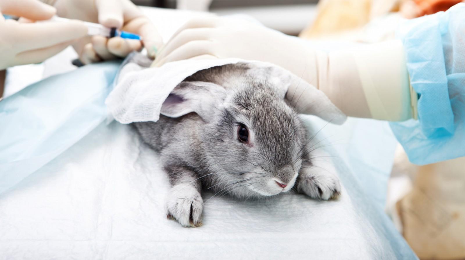 Eurodeputații cer interdecția globală privind testarea cosmeticelor pe animale