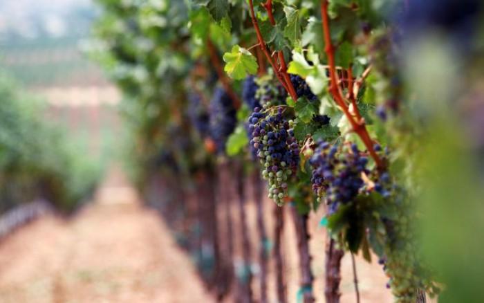 Experți francezi în vinificație: Calitatea vinului moldovenesc s-a schimbat considerabil