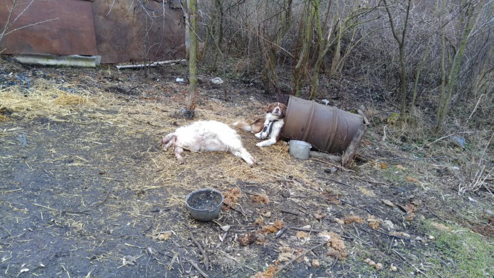 (foto) Alertă în Cimișlia: O haită de lupi a atacat o gospodărie și a devorat mai multe animale