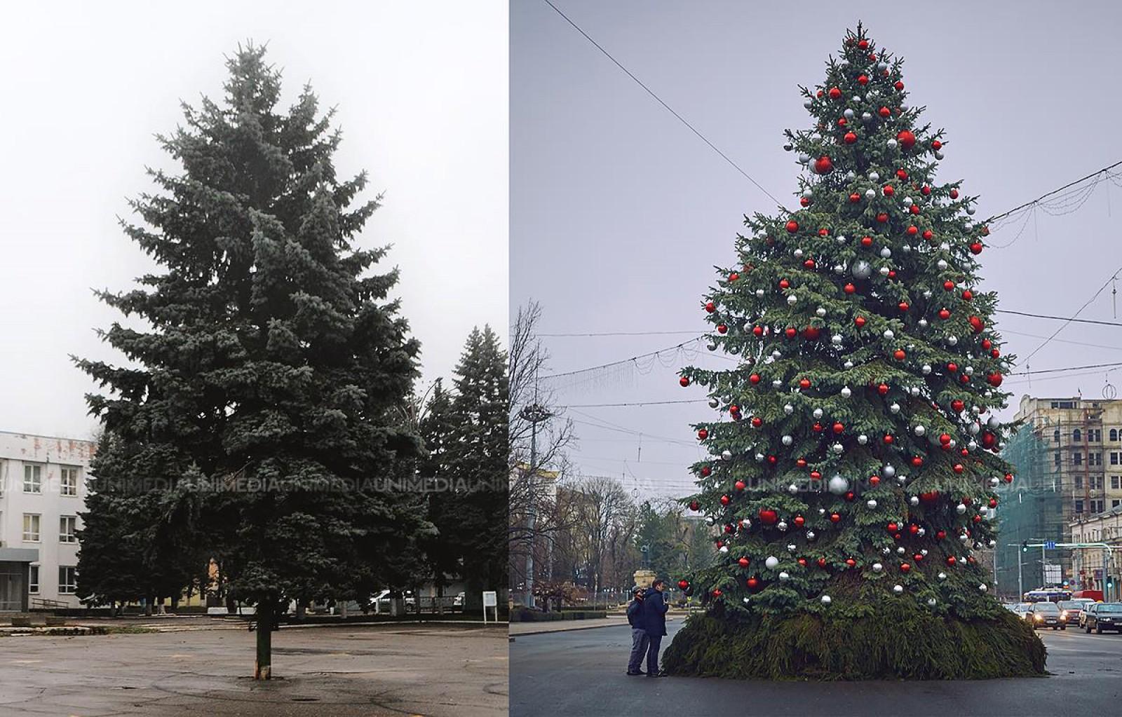 (foto) Bradul din Ungheni, mai frumos decât cel din Chișinău? Pomul este de aproape două ori mai ieftin decât cel din capitală