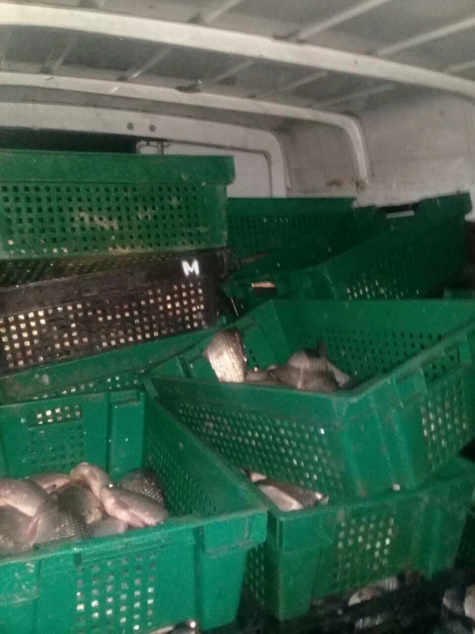 (foto) O nouă tentativă de comercializarea peștelui fără acte de proveniență: Circa două tone au fost distruse