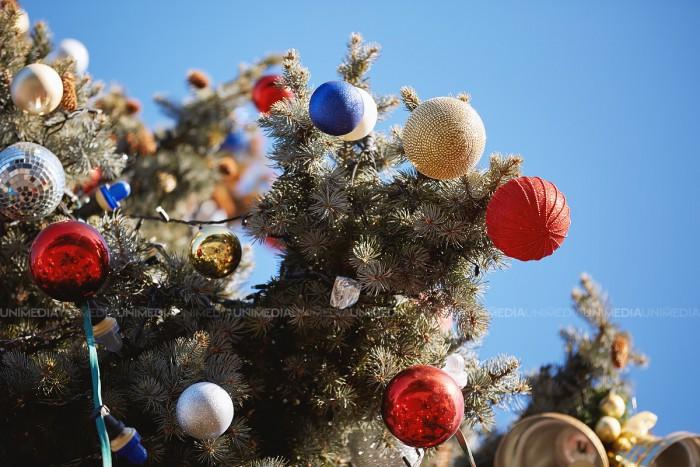 (foto) Principalul pom de Crăciun al țării va fi adus din Ucraina: Are aproximativ 29 de metri înălțime