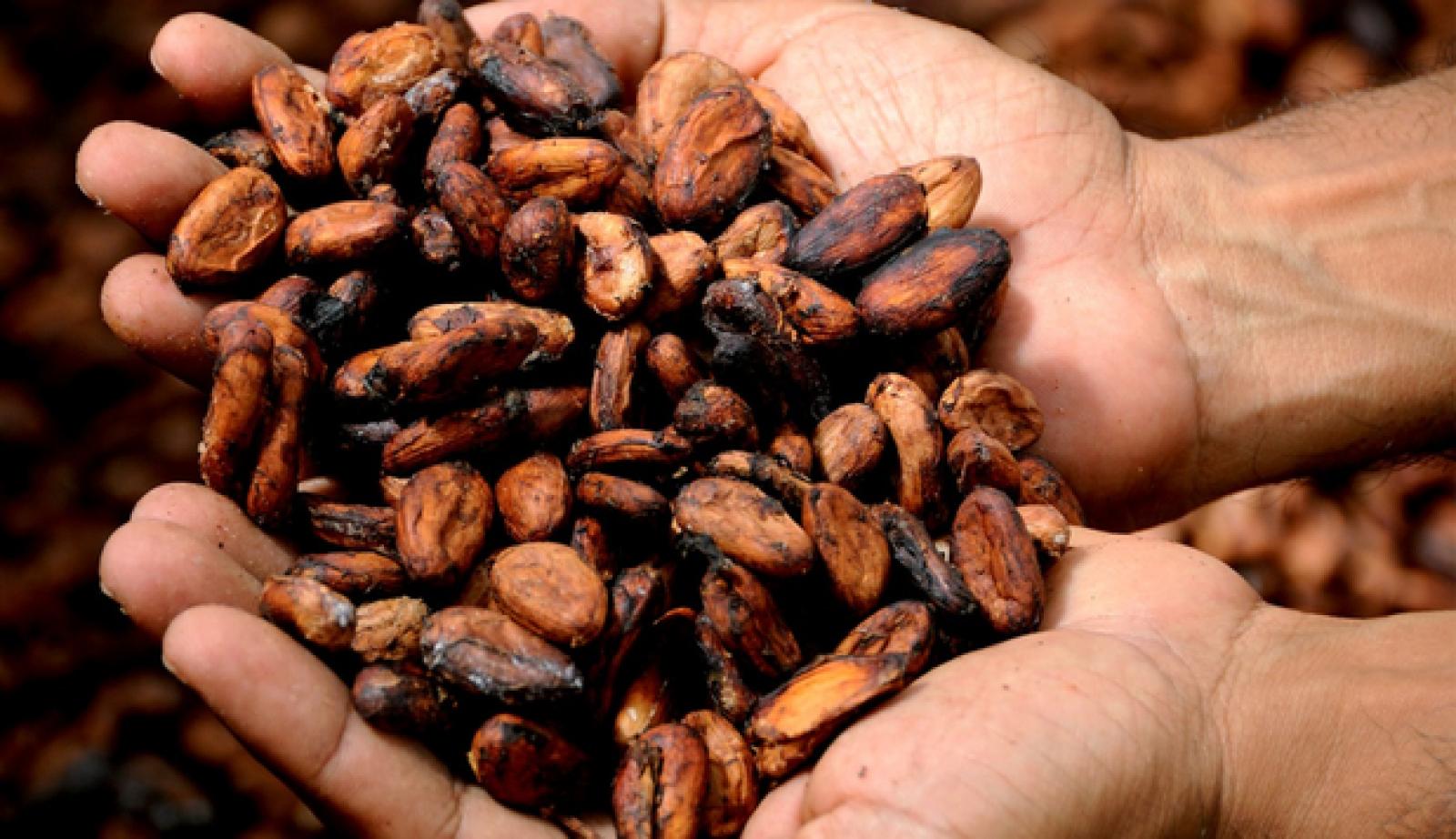Mayaşii au utilizat ciocolata ca monedă de schimb