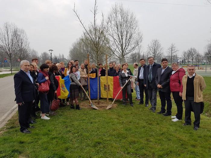 (foto/video) Primul pom, care inaugurează Aleea Diasporei din Italia, a fost sădit