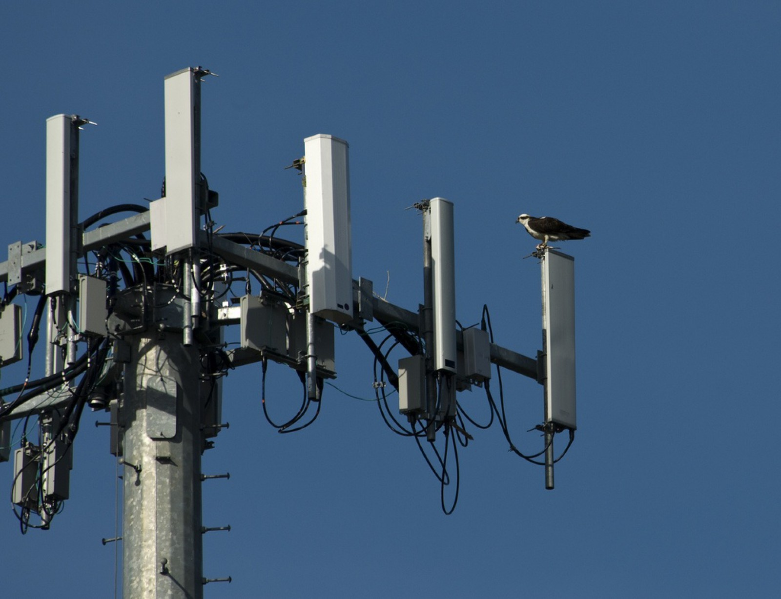 Va fi îmbunătățită calitatea serviciilor de comunicații electronice mobile