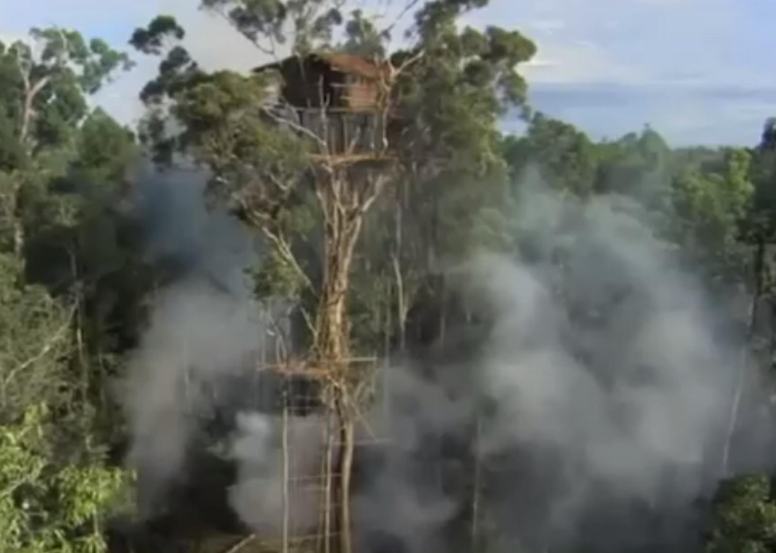 (video) BBC recunoaşte trucarea unor scene de documentar. Nu este prima oară